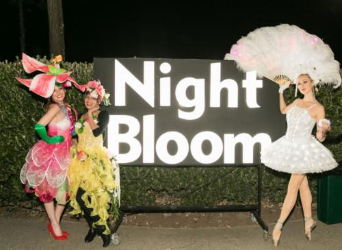 Catalyst Arts Entertainment performs at Conservatory of Flowers Night Bloom 2019 on November 22nd 2019 at Conservatory of Flowers in San Francisco, CA (Photo - Devlin Shand for Drew Altizer Photography)